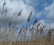 05-01 Grasses