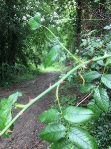 Paths1.bcf