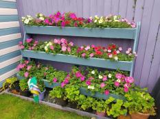 Petunias in Ladder rack_TRF
