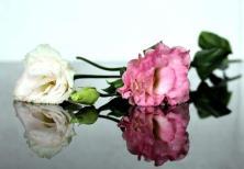 SB_Roses 2