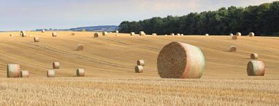 SB Harvest 1 (2)
