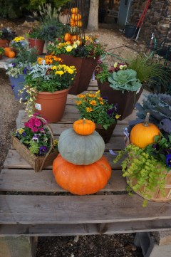 Fall Patio Pot inspiration