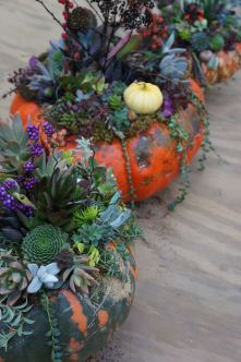 pumpkins with succulents