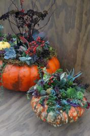 colorful pumpkins with succulents