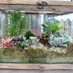 Diy Terrarium Tutorial Westwood Gardens