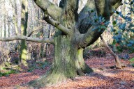 Craggy Wood