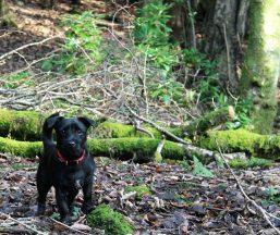 spud in the wood