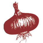 Wethersfield Onion