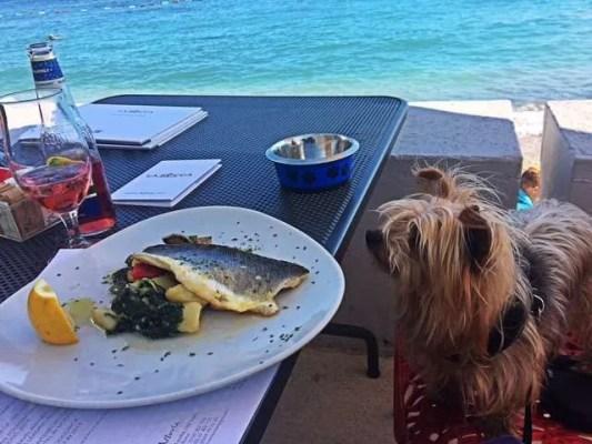 10 Best Food in Budva, Montenegro_Sea Bass
