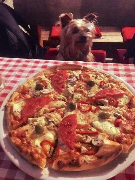 10 Best Food in Budva, Montenegro_Vegetarian Pizza
