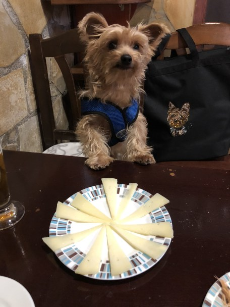 10 BEST Dog-Friendly Restaurants in Barcelona