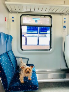 5 Reasons why you should travel with your dog