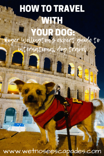 How to travel with your dog