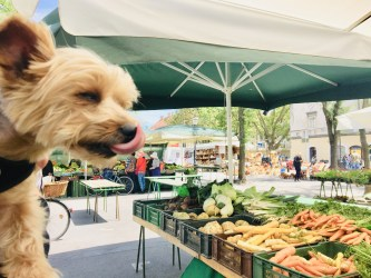 10 CHOPS-LICKIN' and Healthy Dog Travel Treats