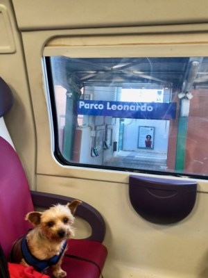 10 PAW-LICKIN' and healthy dog travel treats