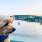 Roger Wellington, the world traveling dog: 10 Random Facts!