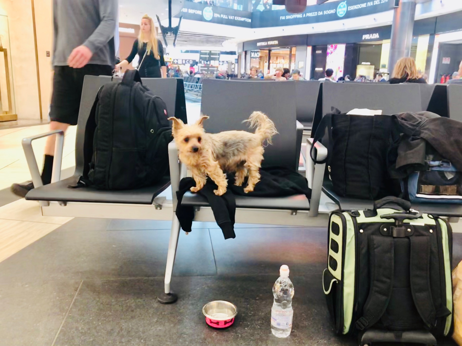 10 Dog Travel Essentials: What to pack for your dog (Part I)