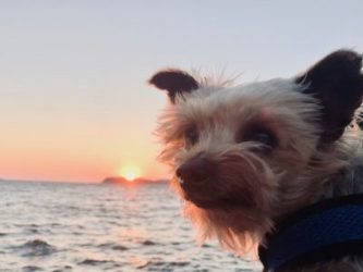 10 Favorite Moments from the World Traveling Yorkie