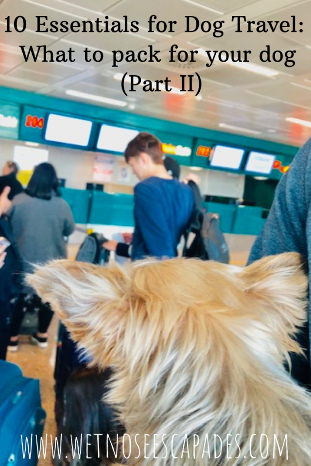 Essentials for Dog Travel_ What to pack for your dog (Part II)