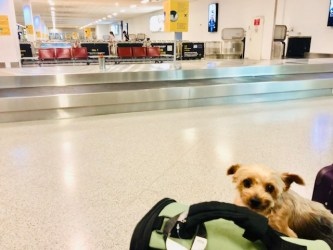 Essentials for Dog Travel: What to pack for your dog (Part II)