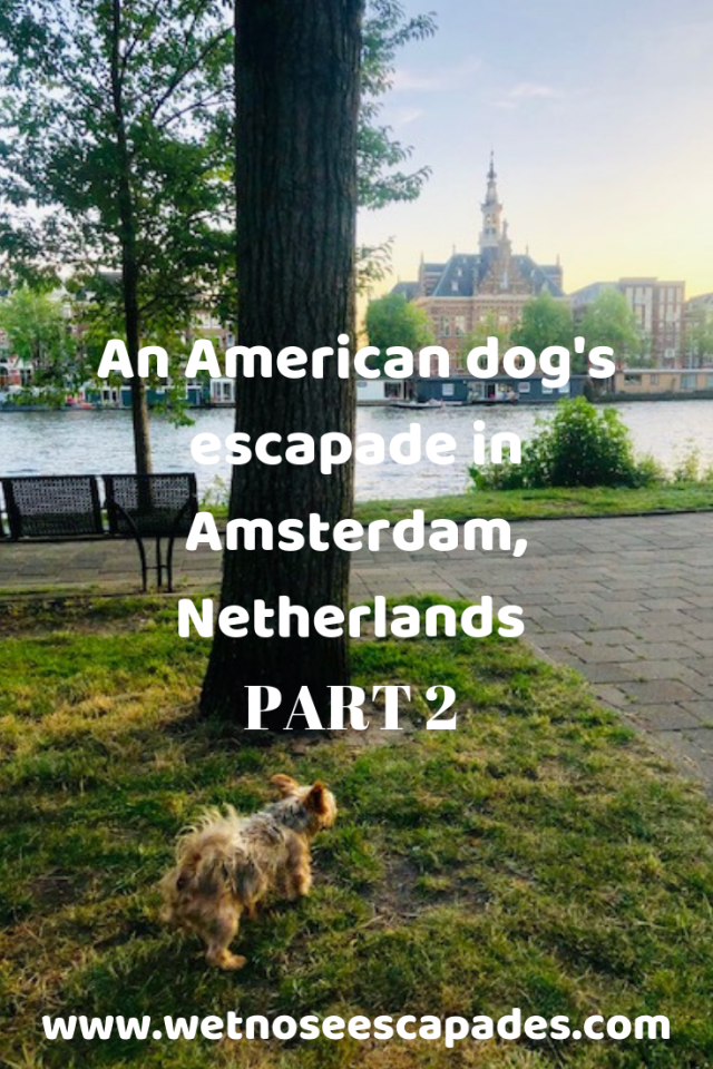 An American dog's escapade in Amsterdam, Netherlands