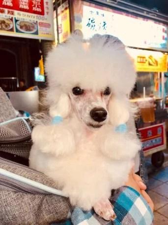 Dogs of Taipei: Part 1