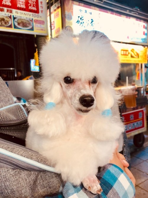 Dogs of Taipei: Part 1