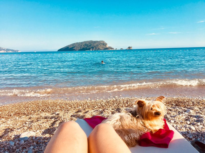 Is Montenegro Dog-Friendly? A Yorkie's Guide to Visiting Montenegro with a Dog