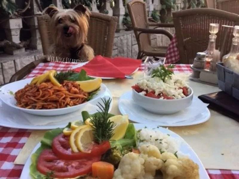dog friendly montenegro restaurants