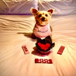 How to celebrate Valentine's Day with your DOG