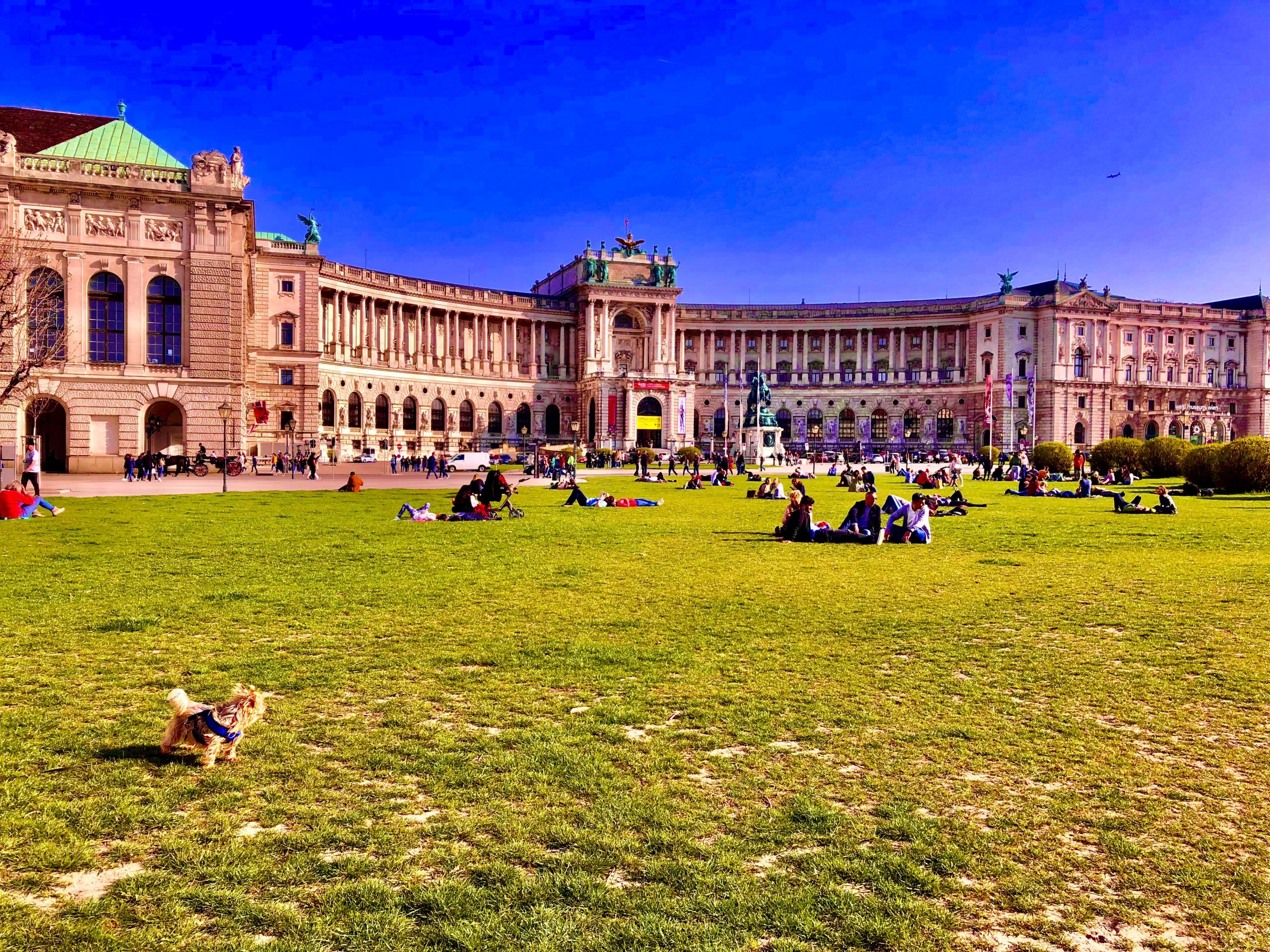 10 Things to do with your dog in Vienna, Austria