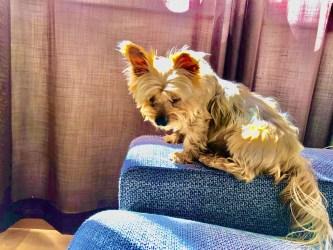 American dog in coronavirus quarantine in Spain: Lockdown Days 6 to 10