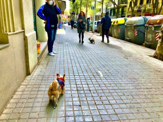 American dog in coronavirus quarantine in Spain: First 5 Days of LOCKDOWN