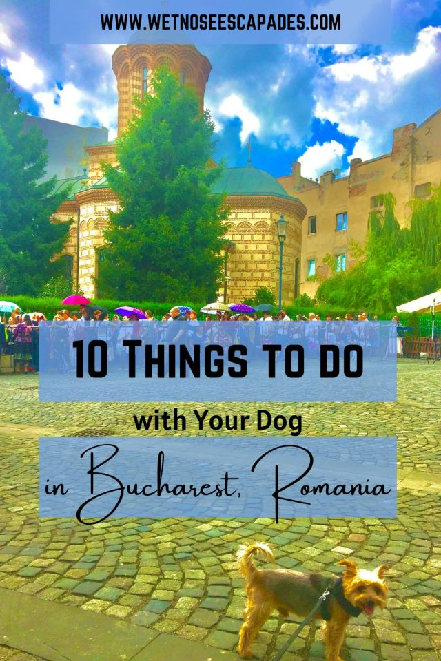 10 Things to do with your dog in Bucharest, Romania