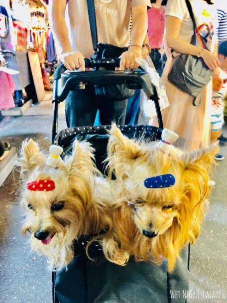 how to spoil your yorkie or dog