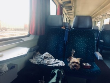 How a dog traveler takes on all modes of transportation (VIDEO)