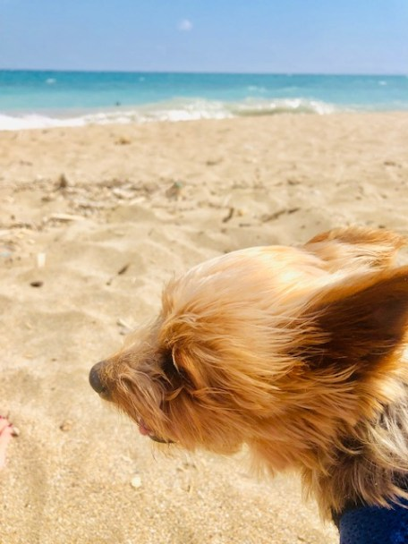 7 Ways to Help Animals while Traveling