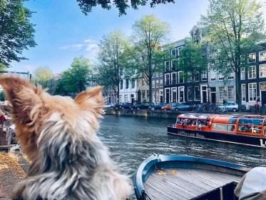 Roger Wellington returns to Amsterdam! PART 2 (VIDEO)
