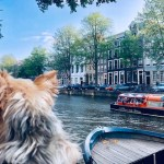 Dog Travel in Amsterdam: The Return of Roger Wellington (Part 2)
