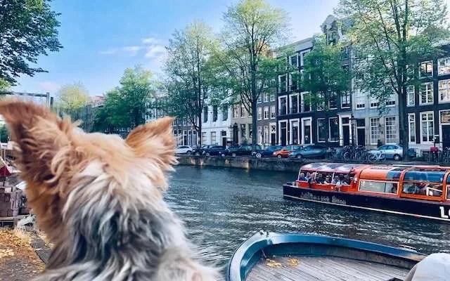 Roger Wellington returns to Amsterdam! PART 2