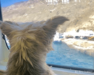 Traveling with Your Dog to the Greek Islands by Ferry