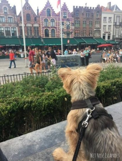 Dog-Friendly Places in Bruges, Belgium