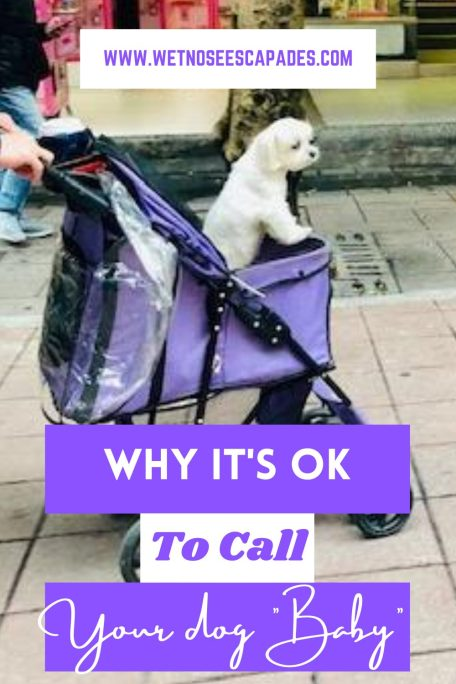 """Why it's OK to Call Your Dog """"Baby"""""""