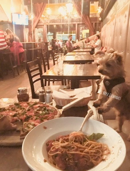 Yorkie Dog dining in San Francisco_dog friendly restaurants in San Francisco