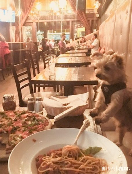 Dog-Friendly Activities in San Francisco Dining with dog