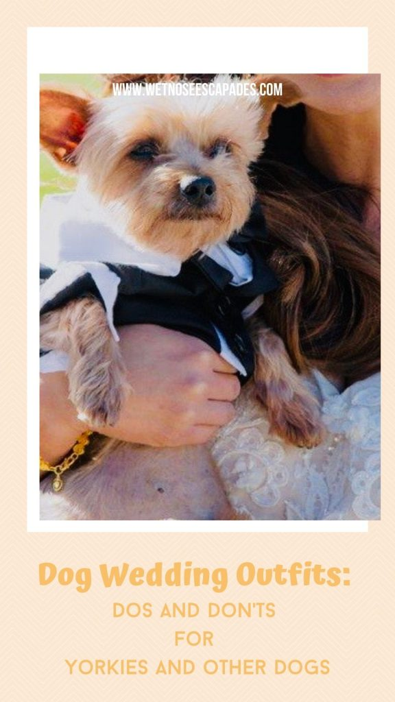 yorkie dog wedding outfit tips