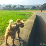 Dog-Friendly Activities in San Francisco, CA (from the San Franciscan Dog)