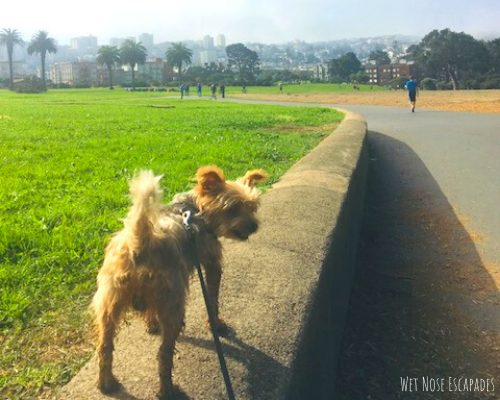 things to do with your dog in san francisco, great meadows