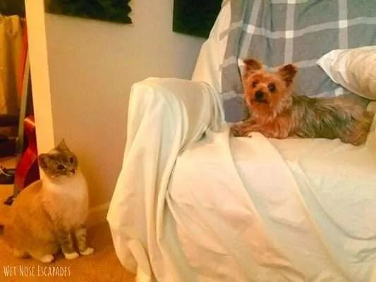 keep dog confined room