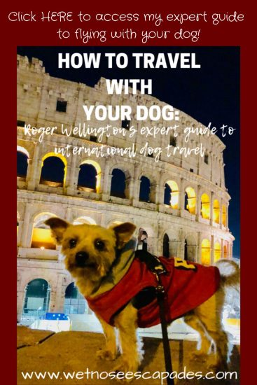 how to travel with your dog, flying with your dog
